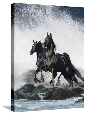 Dream Horses 073-Bob Langrish-Stretched Canvas Print
