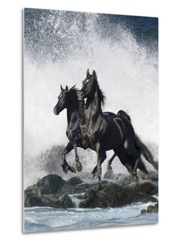 Dream Horses 073-Bob Langrish-Metal Print