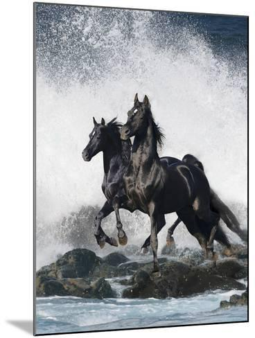 Dream Horses 073-Bob Langrish-Mounted Photographic Print