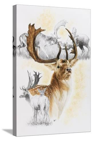 Fallow Deer-Barbara Keith-Stretched Canvas Print