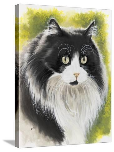 Maine Coon-Barbara Keith-Stretched Canvas Print
