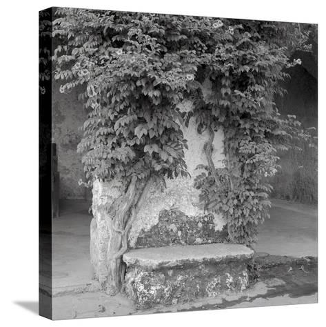 Campagnia II-Alan Blaustein-Stretched Canvas Print