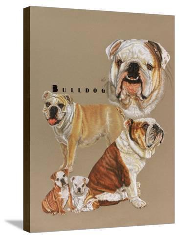Bulldog-Barbara Keith-Stretched Canvas Print