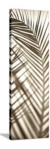 Florison 72-Alan Blaustein-Stretched Canvas Print