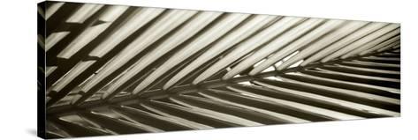 Florison 100-Alan Blaustein-Stretched Canvas Print