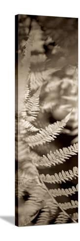 Florison 80-Alan Blaustein-Stretched Canvas Print