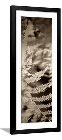 Florison 80-Alan Blaustein-Framed Art Print