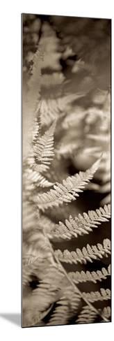 Florison 80-Alan Blaustein-Mounted Photographic Print