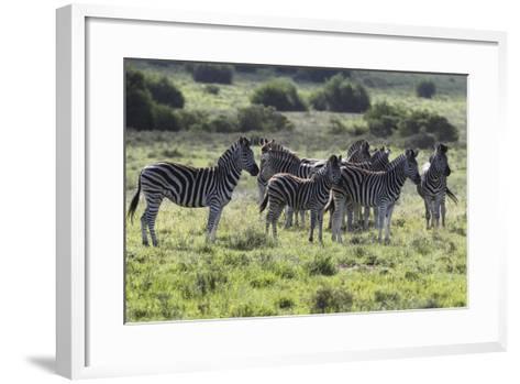 African Zebras 101-Bob Langrish-Framed Art Print
