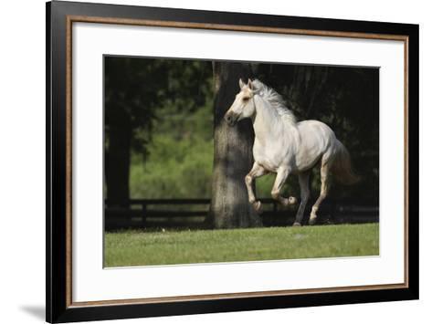 Lusitano 005-Bob Langrish-Framed Art Print