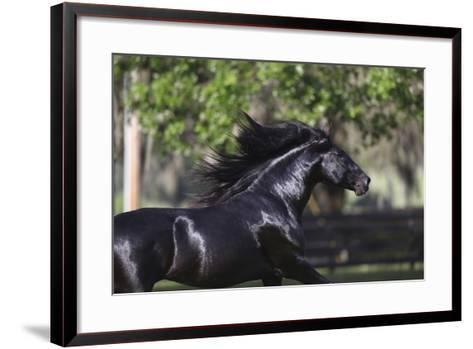 Lusitano 004-Bob Langrish-Framed Art Print