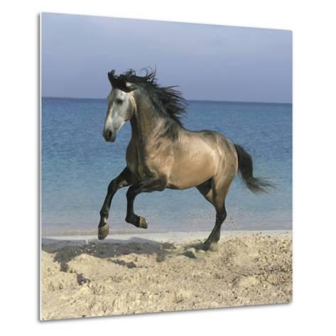 Dream Horses 102-Bob Langrish-Metal Print