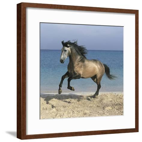 Dream Horses 102-Bob Langrish-Framed Art Print