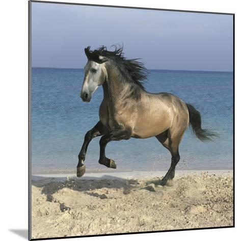 Dream Horses 102-Bob Langrish-Mounted Photographic Print