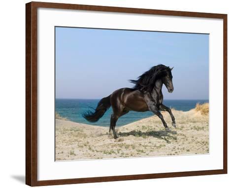 Dream Horses 100-Bob Langrish-Framed Art Print