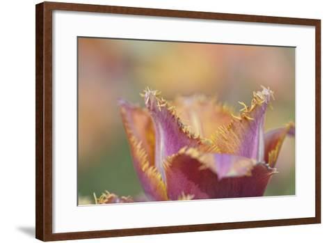 Tulip Crispa-Cora Niele-Framed Art Print