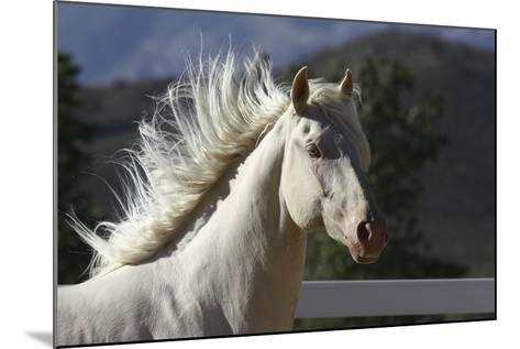 Lusitano 006-Bob Langrish-Mounted Photographic Print