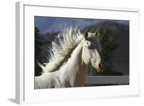 Lusitano 006-Bob Langrish-Framed Art Print