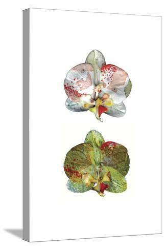 Solitude Vol II-Cayena Blanca-Stretched Canvas Print