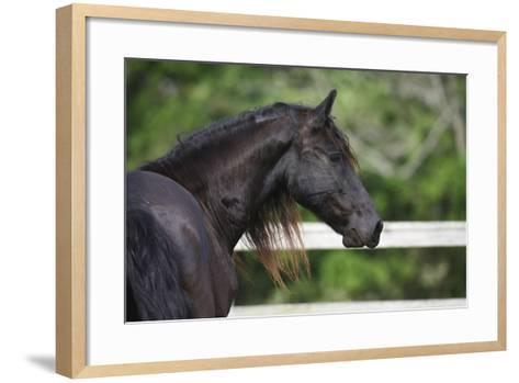 Clydesdales 003-Bob Langrish-Framed Art Print