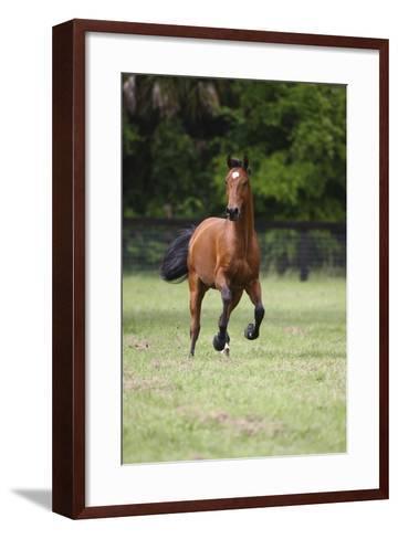 Quarter Horses 012-Bob Langrish-Framed Art Print
