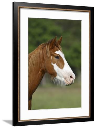 Quarter Horses 013-Bob Langrish-Framed Art Print