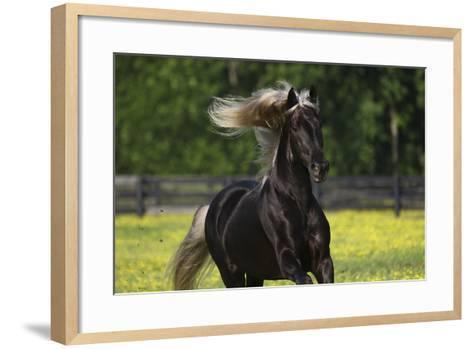 Rocky Mountain Stallion 002-Bob Langrish-Framed Art Print
