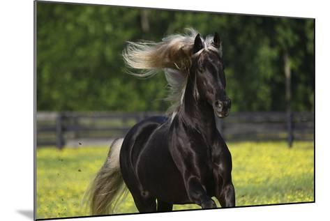 Rocky Mountain Stallion 002-Bob Langrish-Mounted Photographic Print