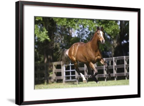 Thoroughbred 001-Bob Langrish-Framed Art Print