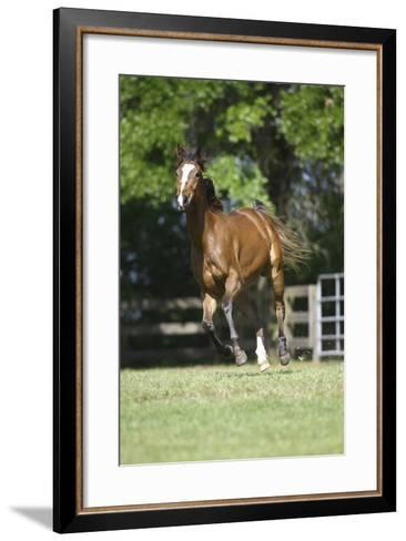 Thoroughbred 002-Bob Langrish-Framed Art Print