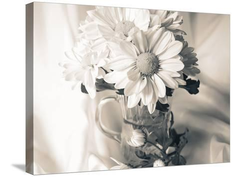 Summer Mums BW-Bob Rouse-Stretched Canvas Print