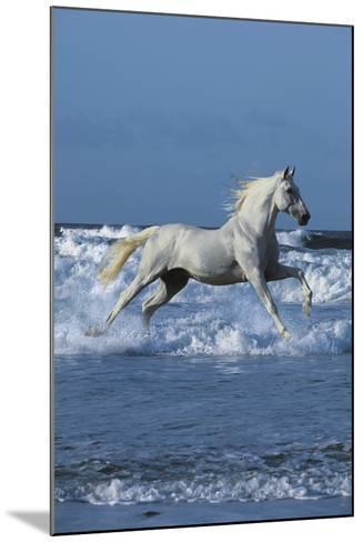 Dream Horses 001-Bob Langrish-Mounted Photographic Print