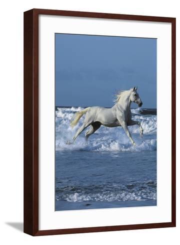 Dream Horses 001-Bob Langrish-Framed Art Print