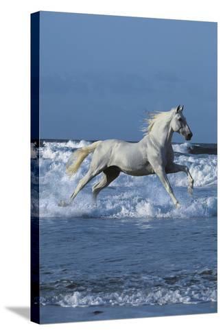Dream Horses 001-Bob Langrish-Stretched Canvas Print