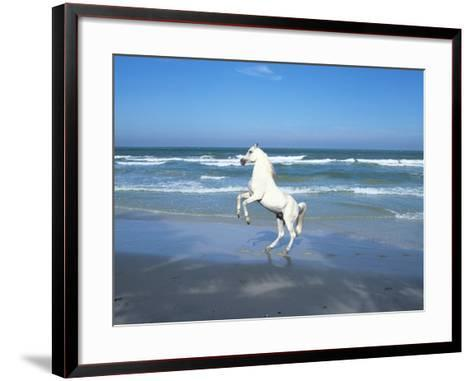 Dream Horses 006-Bob Langrish-Framed Art Print