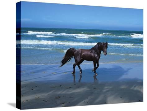 Dream Horses 004-Bob Langrish-Stretched Canvas Print