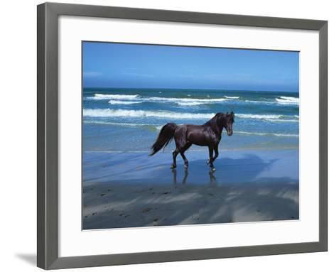 Dream Horses 004-Bob Langrish-Framed Art Print