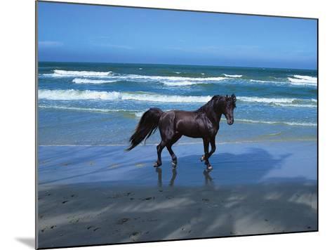 Dream Horses 004-Bob Langrish-Mounted Photographic Print