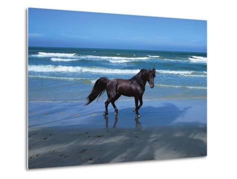 Dream Horses 004-Bob Langrish-Metal Print