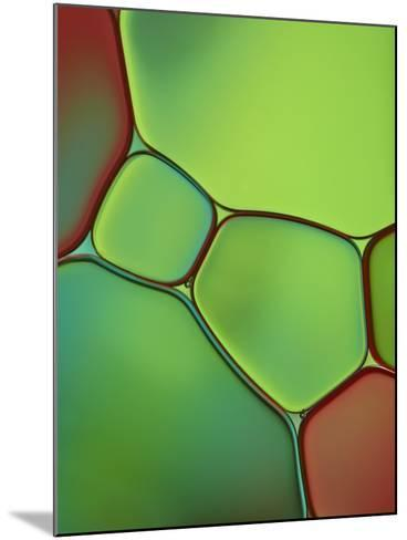 Stained Glass IV-Cora Niele-Mounted Photographic Print