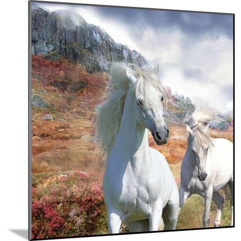 Dream Horses 031-Bob Langrish-Mounted Photographic Print