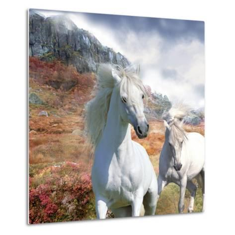 Dream Horses 031-Bob Langrish-Metal Print