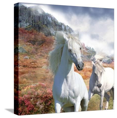 Dream Horses 031-Bob Langrish-Stretched Canvas Print