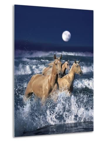Dream Horses 036-Bob Langrish-Metal Print