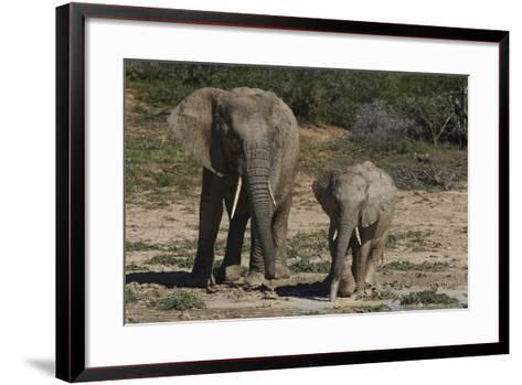 African Elephants 086-Bob Langrish-Framed Art Print