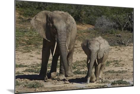 African Elephants 086-Bob Langrish-Mounted Photographic Print