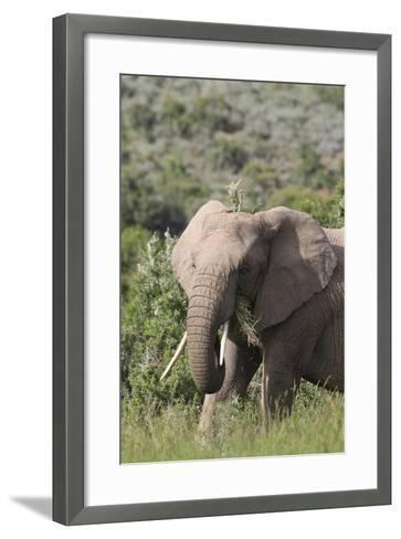 African Elephants 085-Bob Langrish-Framed Art Print