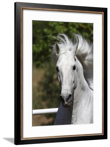 Andalusian 030-Bob Langrish-Framed Art Print