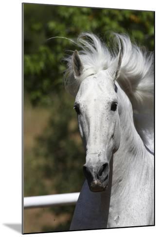 Andalusian 030-Bob Langrish-Mounted Photographic Print