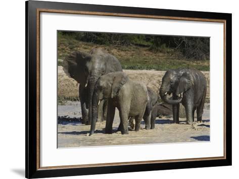 African Elephants 088-Bob Langrish-Framed Art Print